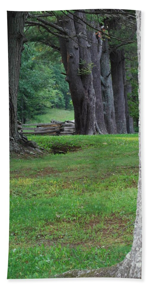 Trees Beach Towel featuring the photograph Tree Line by Eric Liller