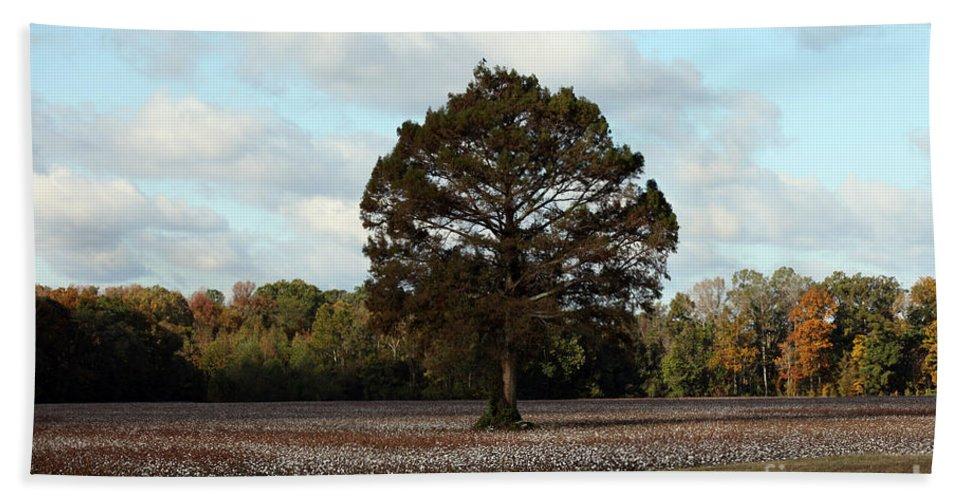Tree Beach Towel featuring the photograph Tree No Fog by Amanda Barcon