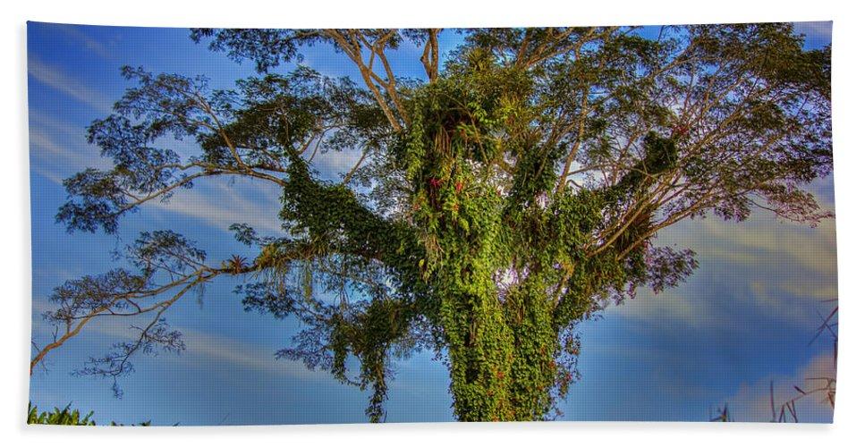 Trinidad Beach Towel featuring the photograph Tree Of Life by Nadia Sanowar