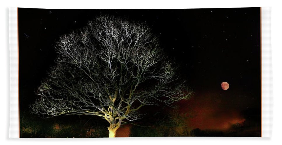 Tree Beach Towel featuring the photograph Tree Of Light by Mal Bray