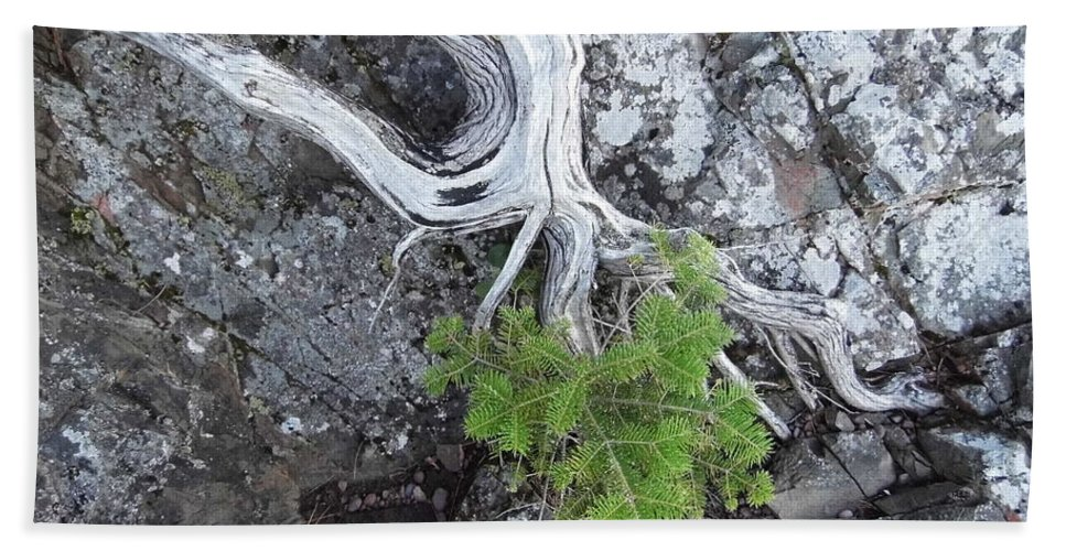 Tree Beach Towel featuring the photograph Tree On Rock by Two Bridges North