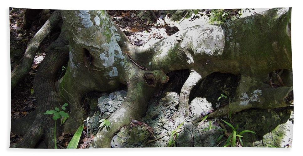 Grotto Beach Towel featuring the photograph Tree Roots On The Bank by D Hackett