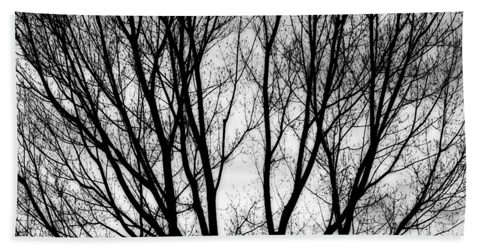 Silhouette Beach Towel featuring the photograph Tree Silhouettes In Black And White by James BO Insogna