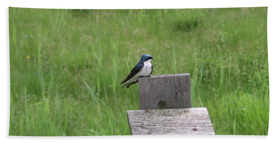 Bird Beach Towel featuring the photograph Tree Swallow 1 by Rich Bodane