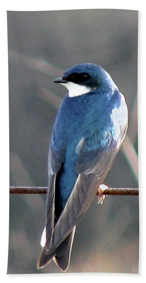 Bird Beach Towel featuring the photograph Tree Swallow by Donna Brown