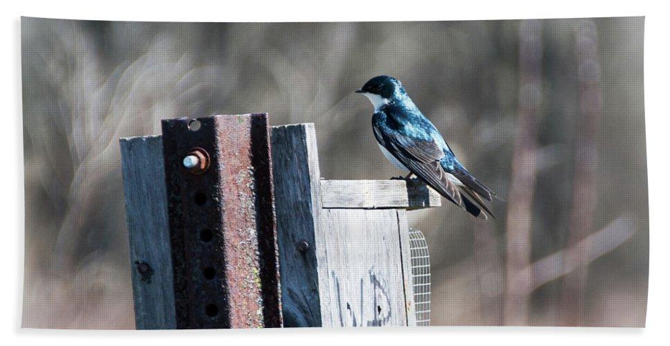 Bird Beach Towel featuring the photograph Tree Swallow by Jennifer Wick