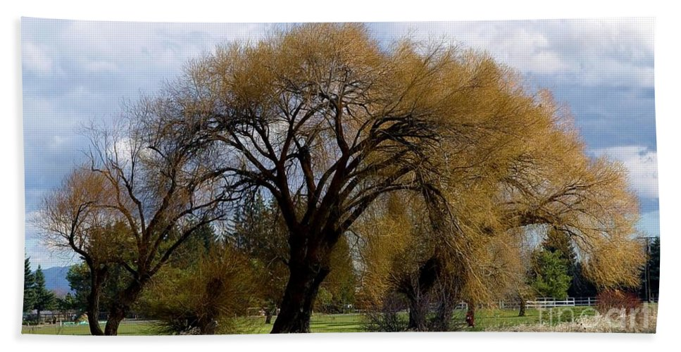 Oak Tree Beach Towel featuring the photograph Trees by Ron Bissett