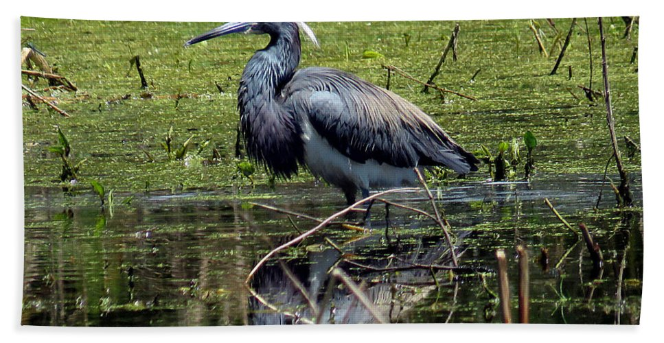 Animals Beach Towel featuring the photograph Tri-colored Heron 12 by J M Farris Photography