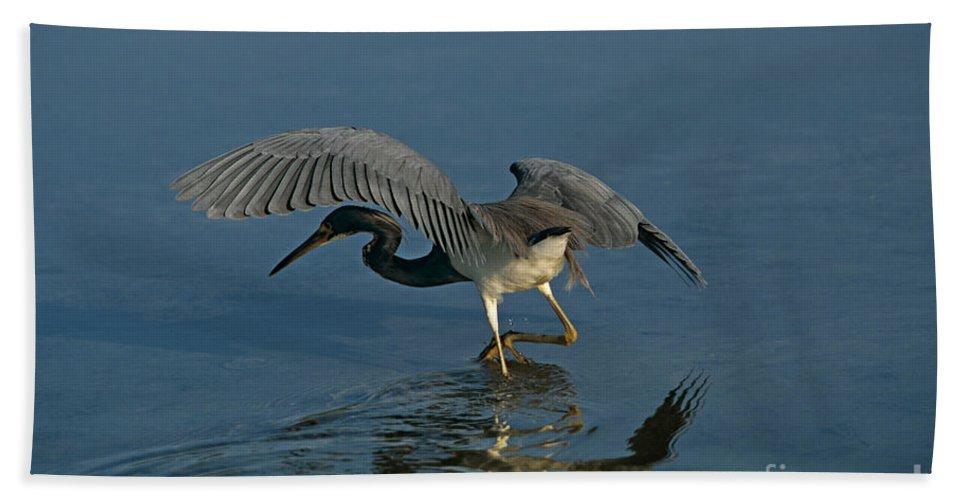 Wading Bird Beach Towel featuring the photograph Tri Colored Heron Fishing by John Harmon