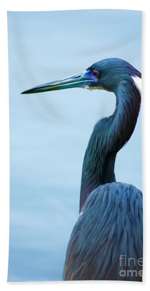 Tri Heron Beach Towel featuring the photograph Tri Colored Pose by Deborah Benoit