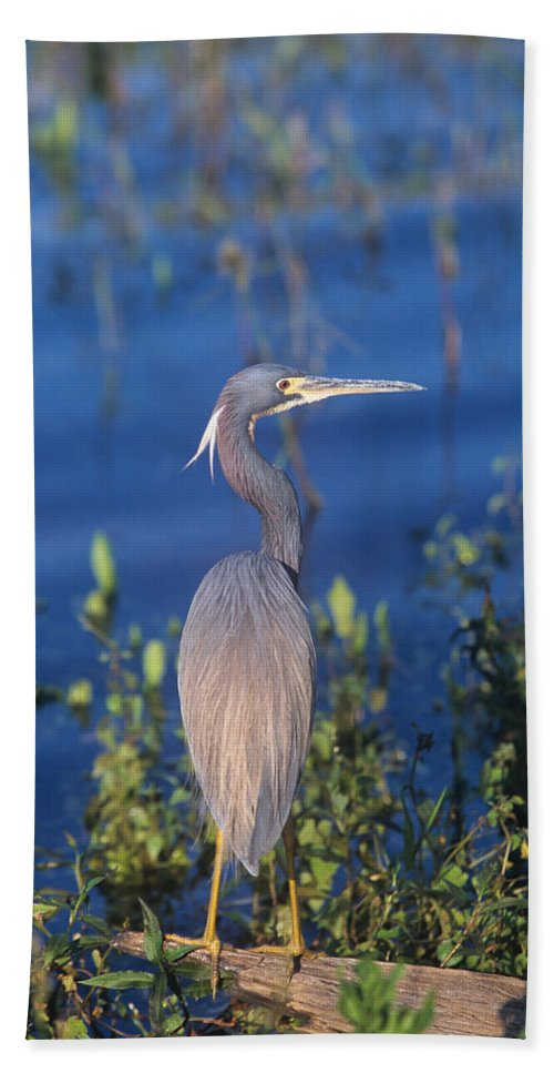 Bird Beach Towel featuring the photograph Tricolored Heron In Monet Like Setting by John Harmon