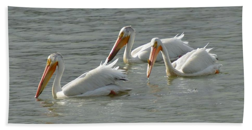 Birds Beach Towel featuring the photograph Trio Pelicans by Wendy Fox