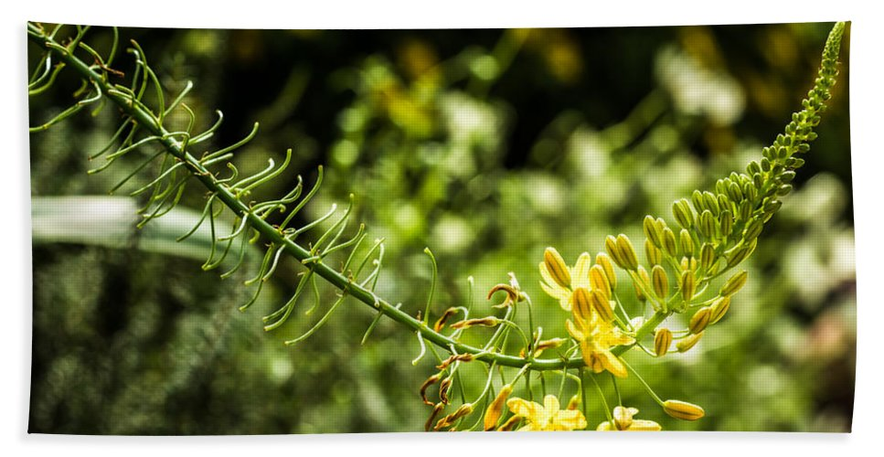 Close-up Beach Towel featuring the photograph Tropical Flowers 7 by Jijo George