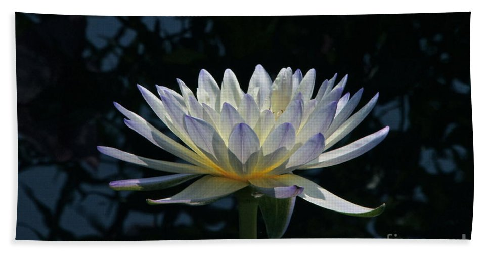 Waterlily Beach Towel featuring the photograph Tropical Glow by Byron Varvarigos