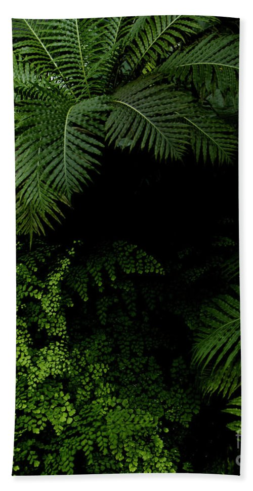 Tropical Jungle Photography Beach Towel featuring the photograph Tropical Jungle by Vanessa GFG