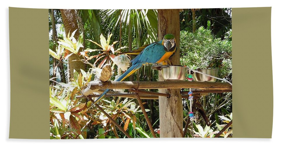 Tropical Birds Beach Towel featuring the digital art Tropical Parrot by Lj White