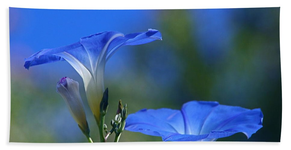 morning Glories Beach Towel featuring the photograph True Blue by Byron Varvarigos