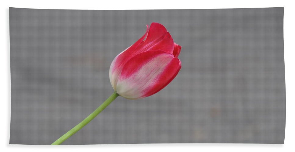 Flower Beach Towel featuring the photograph Tulip 3 by Rich Bodane