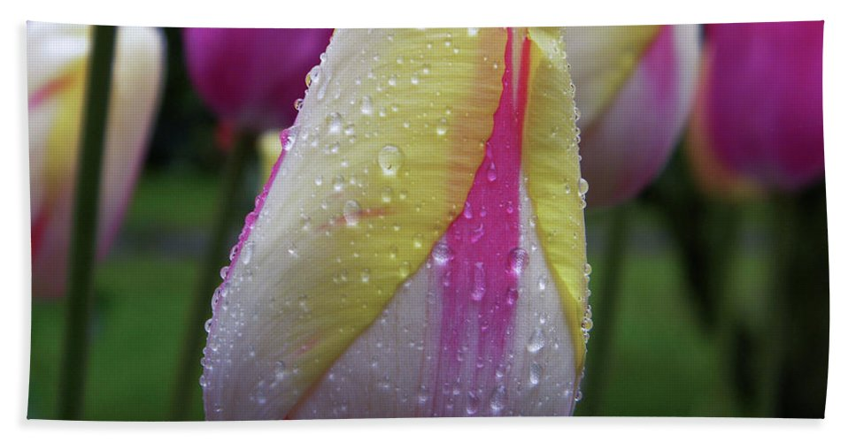 Tulip Close-up Beach Towel featuring the photograph Tulip Close-up 2 by Manuela Constantin