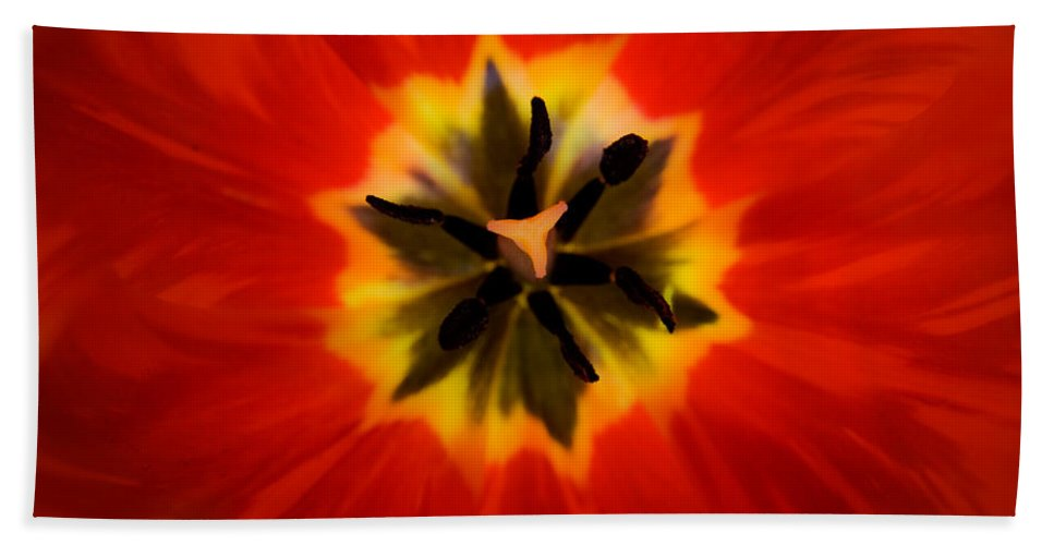 Tulip Beach Towel featuring the photograph Tulip Explosion Kaleidoscope by Teresa Mucha
