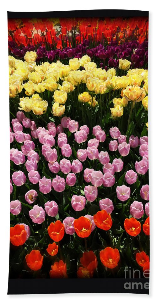 Nature Beach Towel featuring the photograph Tulip Greeting Card by Tom Gari Gallery-Three-Photography