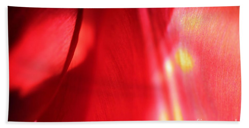 Tulips Beach Towel featuring the photograph Tulip Mind by Amanda Barcon