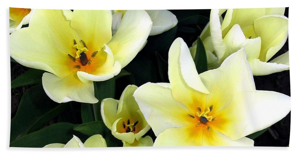 Agriculture Beach Towel featuring the photograph Tulip Town 16 by Will Borden