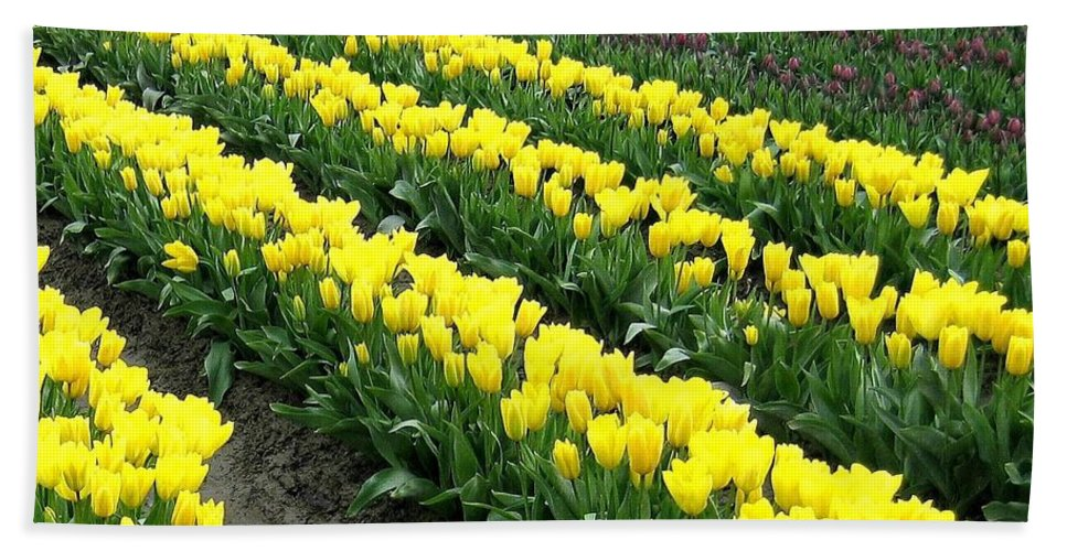 Agriculture Beach Towel featuring the photograph Tulip Town 9 by Will Borden