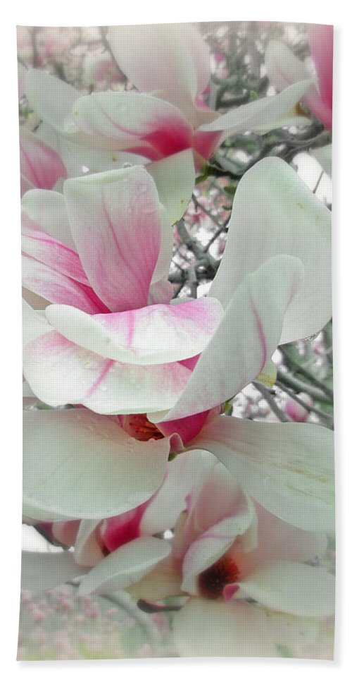 Magnolia Beach Towel featuring the photograph Tulip Tree Blossoms - Magnolia Liliiflora by Mother Nature