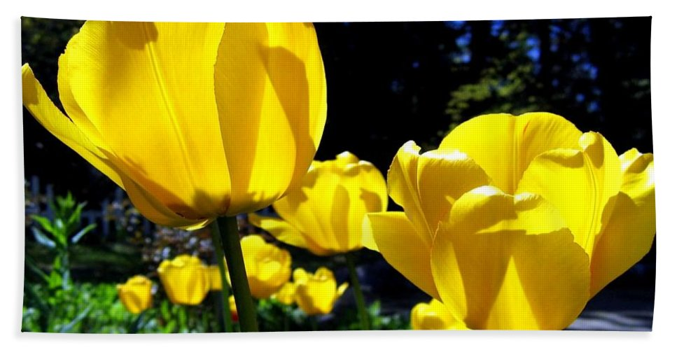 Tulips Beach Towel featuring the photograph Tulipfest 5 by Will Borden