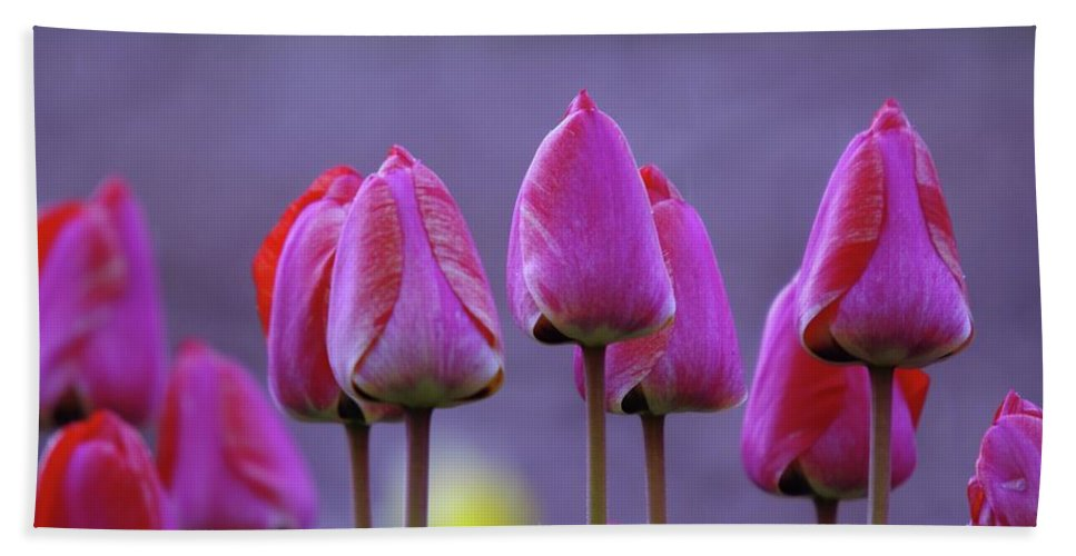 Tulips Beach Towel featuring the photograph Tullips by Jeff Swan