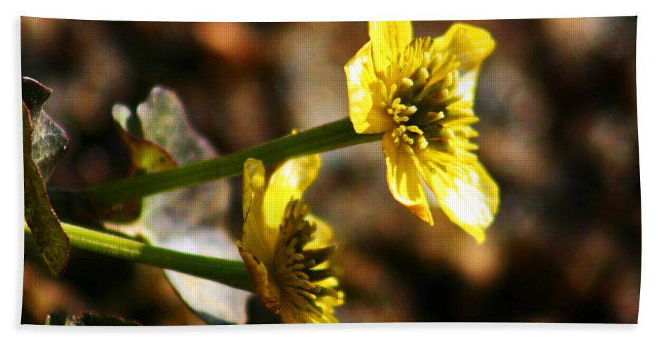 Wild Flowers Beach Sheet featuring the photograph Tundra Rose by Anthony Jones
