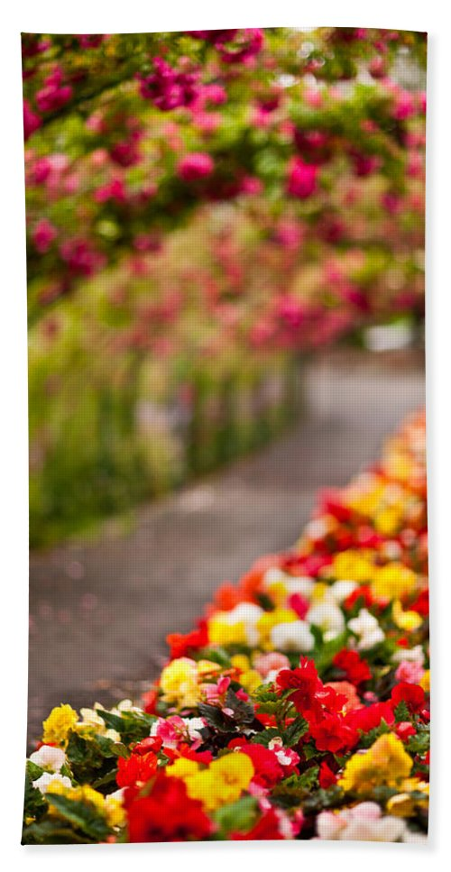 Rose Beach Towel featuring the photograph Tunnel Of Roses by Mike Reid
