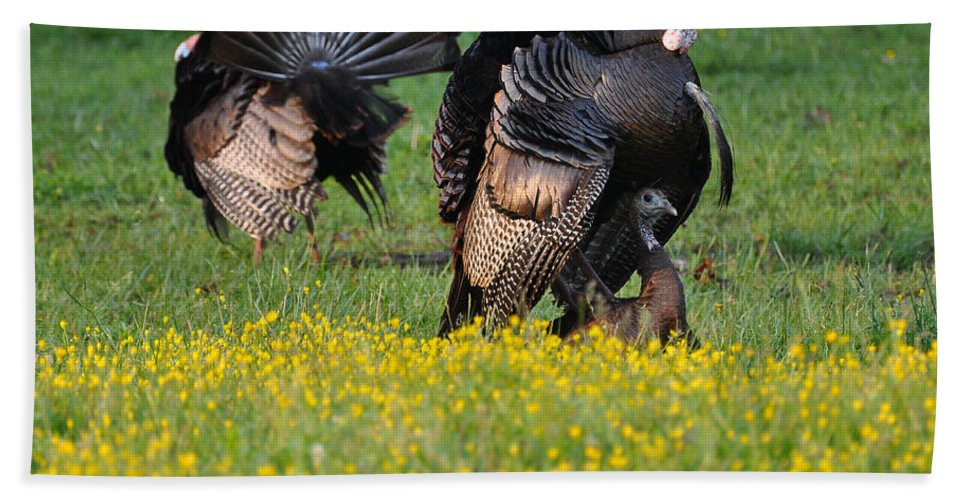 Turkey Beach Towel featuring the photograph Turkey Love by Todd Hostetter