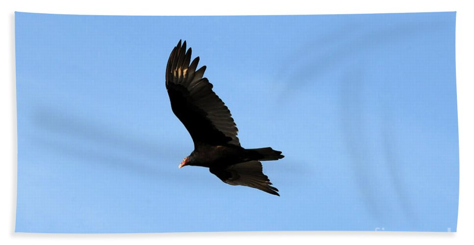 Turkey Vulture Beach Towel featuring the photograph Turkey Vulture by David Lee Thompson