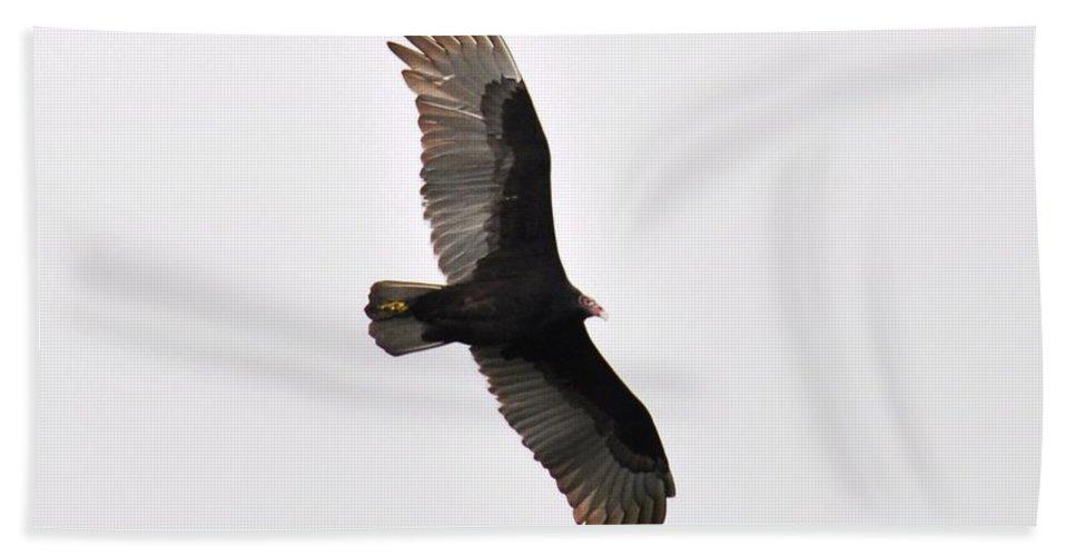Bird Beach Towel featuring the photograph Turkey Vulture by Rich Bodane