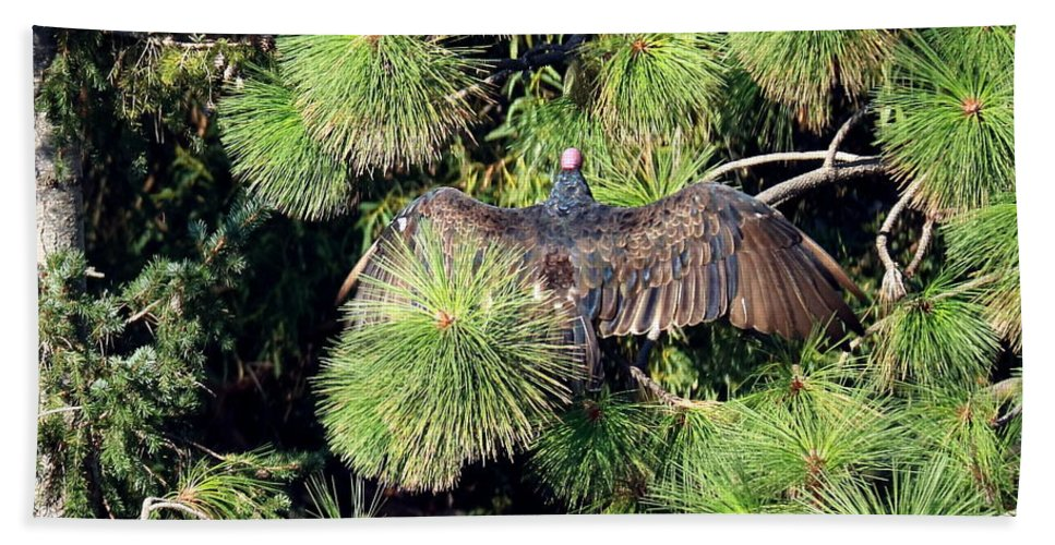 Turkey-vulture Beach Towel featuring the photograph Turkey Vulture Spread Two by Joyce Dickens