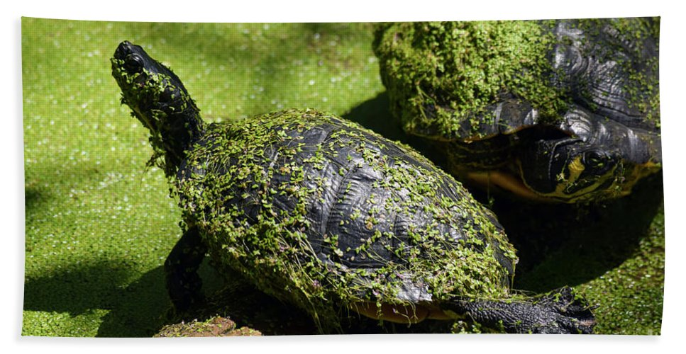 Turtle Yoga Beach Towel featuring the photograph Turtle Yoga by William Tasker