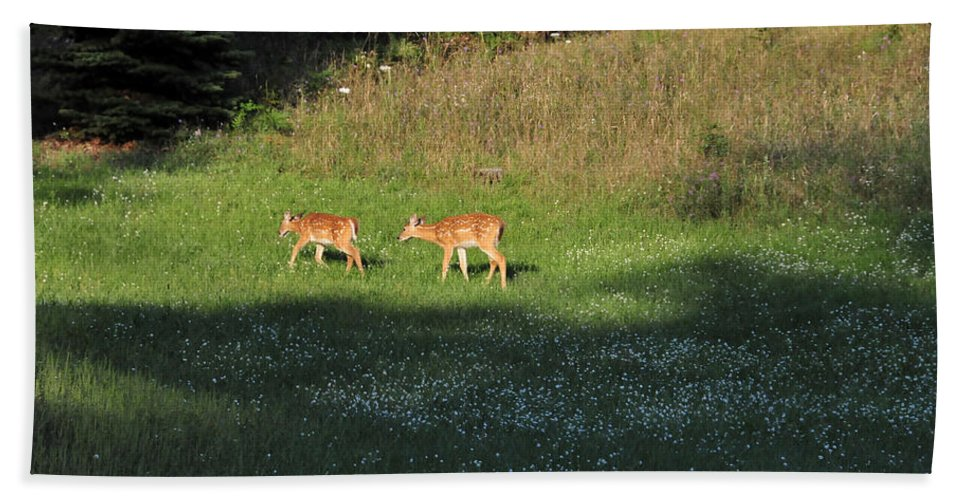 Animals Beach Towel featuring the photograph Twins by David Arment