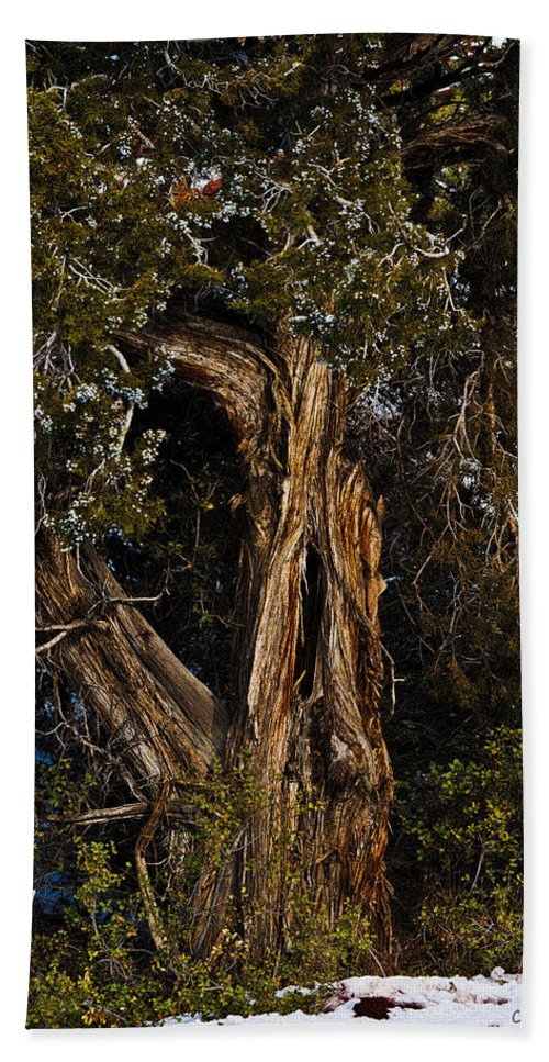 Rocky Mount Juniper Beach Towel featuring the photograph Twisted Juniper by Christopher Holmes