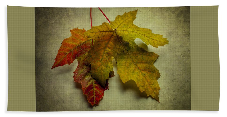 Terry D Photography Beach Towel featuring the photograph Two Autumn Leaves by Terry DeLuco