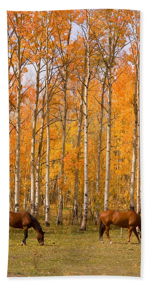 Horse Beach Towel featuring the photograph Two Colorado High Country Autumn Horses by James BO Insogna