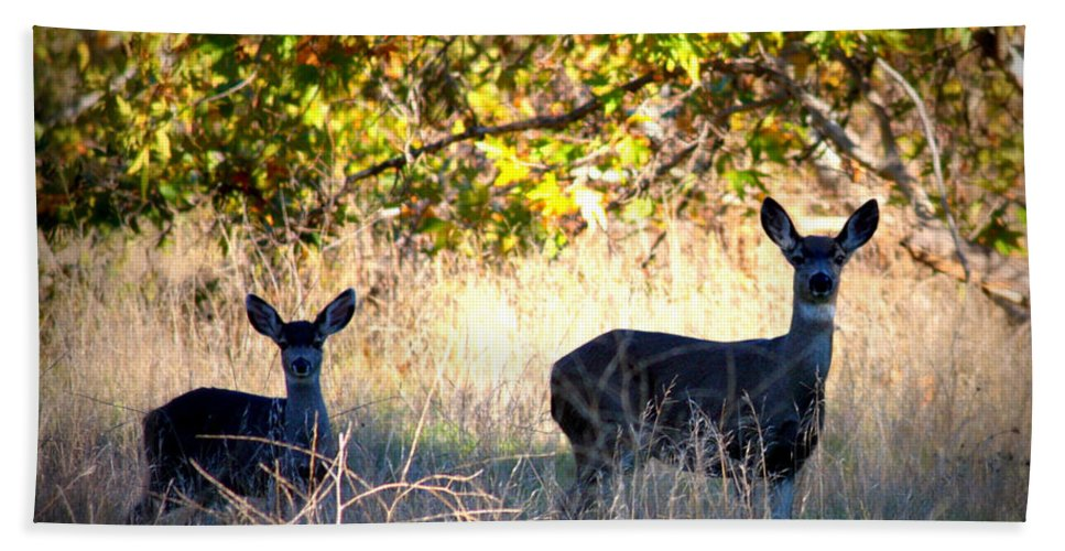 Animal Beach Towel featuring the photograph Two Deer In Autumn Meadow by Carol Groenen