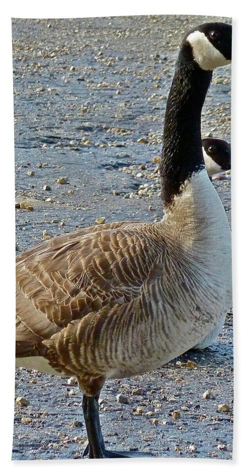 Birds Beach Towel featuring the photograph Two Heads Are Better by Diana Hatcher
