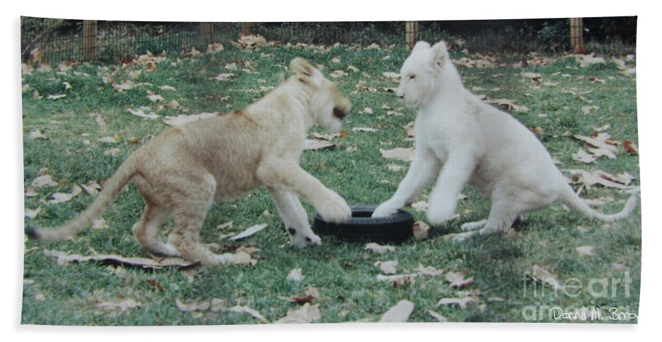 Animals Beach Towel featuring the photograph Two Lion Cubs Playing by Donna Brown
