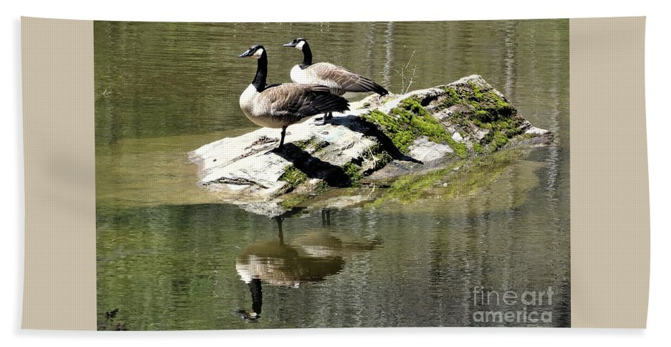 Canada Geese Vermont Beach Towel featuring the photograph Two Plus Two by Karen Velsor