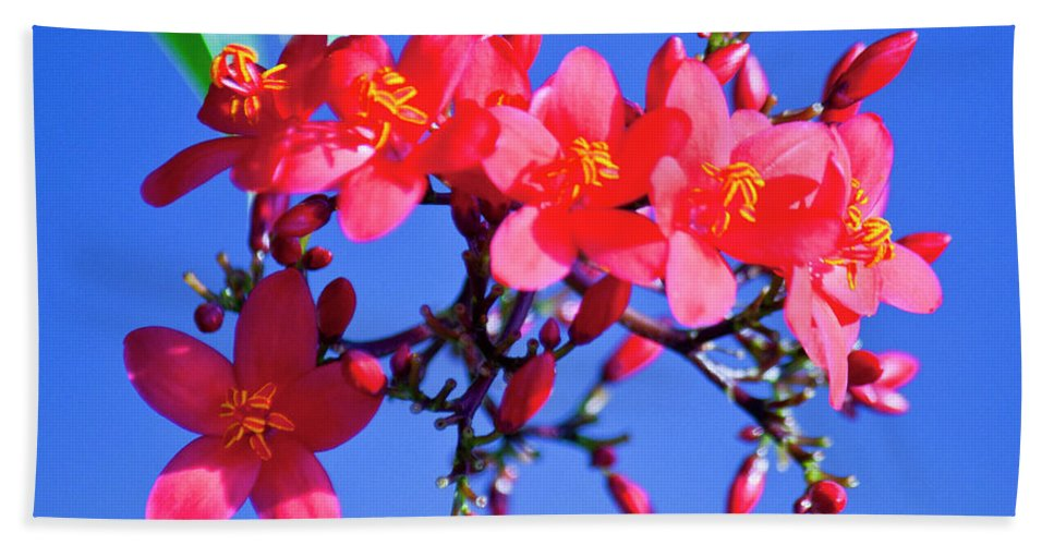 Flower Beach Towel featuring the photograph Typical Florida Day by Donna Walsh