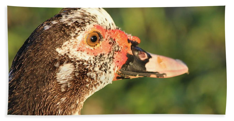 Duck Beach Towel featuring the photograph Ugly Duck by Lauri Novak