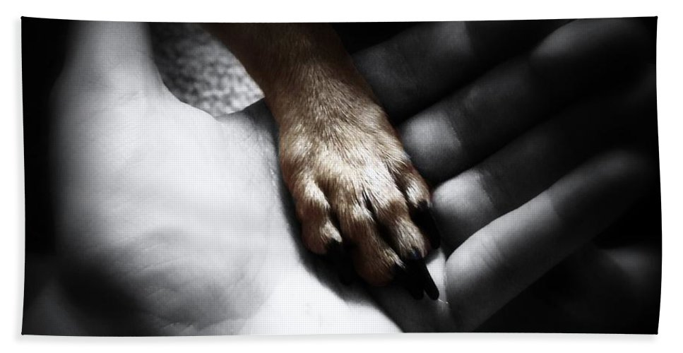 Chihuahua Beach Towel featuring the photograph Unconditional by Shana Rowe Jackson