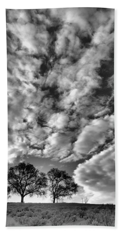 Trees Beach Towel featuring the photograph Under Cover In Black And White by Tara Turner